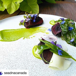 #Repost @seadnacanada ・・・ #loupmarin sur aïoli à l'aneth, herbes marines... @monsieurlapierre @ithqofficiel ✓ ✓ ✓ #passionithq #sealmeat #seadnacanada #seadna #yuleat2017 #mtlmoments #mtlfoodie #chefwithballs #terroir #chefofinstagram #iron #ilesdelamadeleine #terreneuve #cheflife #sealicious #locavore #substainablefood